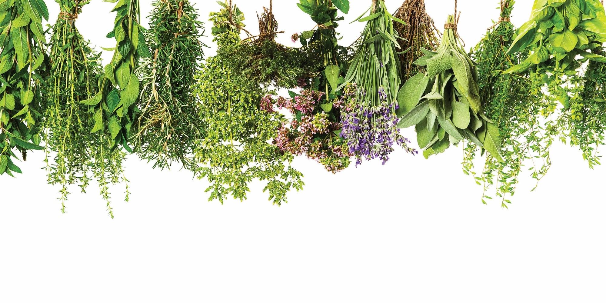 Intervene Herbal